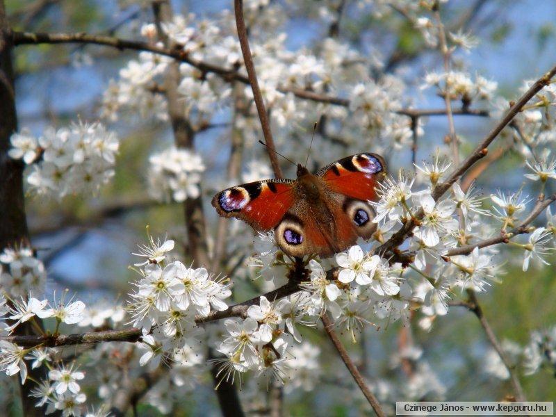 photopapillon.jpg